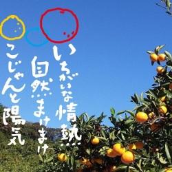 にしごみミカン畑2